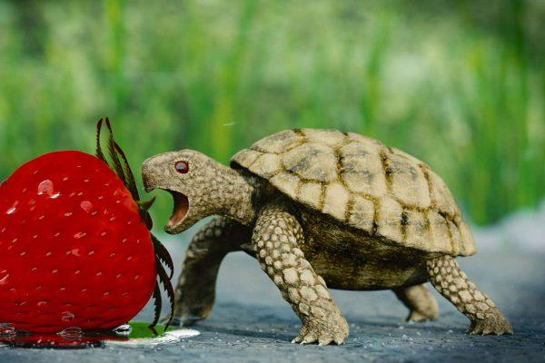 3D Visualisierung einer Schildkröte sie in eine Erdbeere beisst (fotorealistisch)